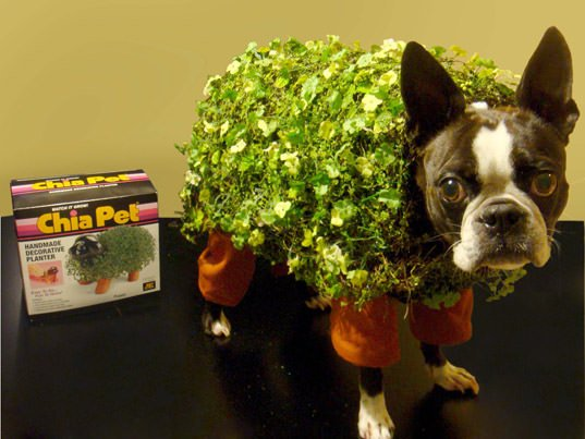 DIY chia pet halloween dog costume image