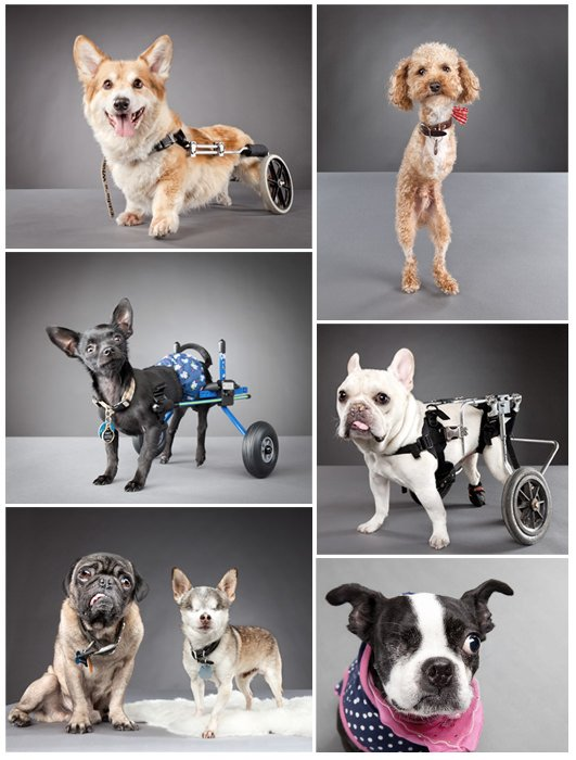 Carli Davidson Pets With Disabilities