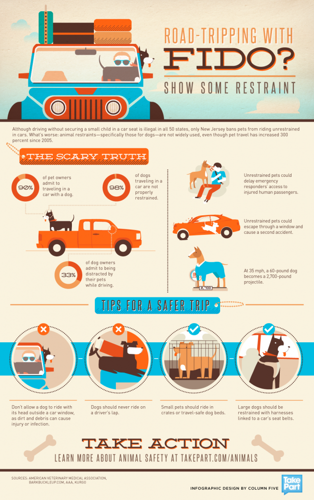 Driving With Dogs Pet Infographic Design