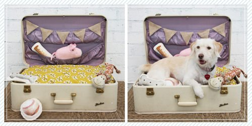 dog-bed-suitcase-DIY-6