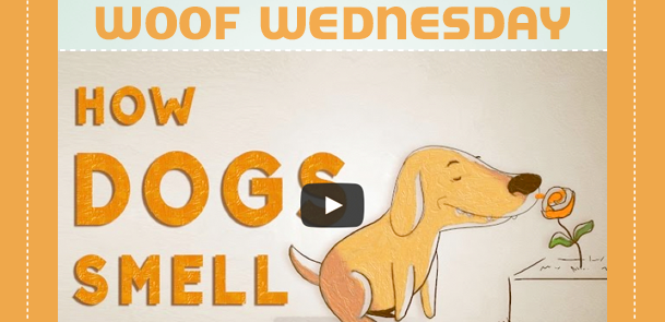 Woof Wednesday – How Dogs Smell