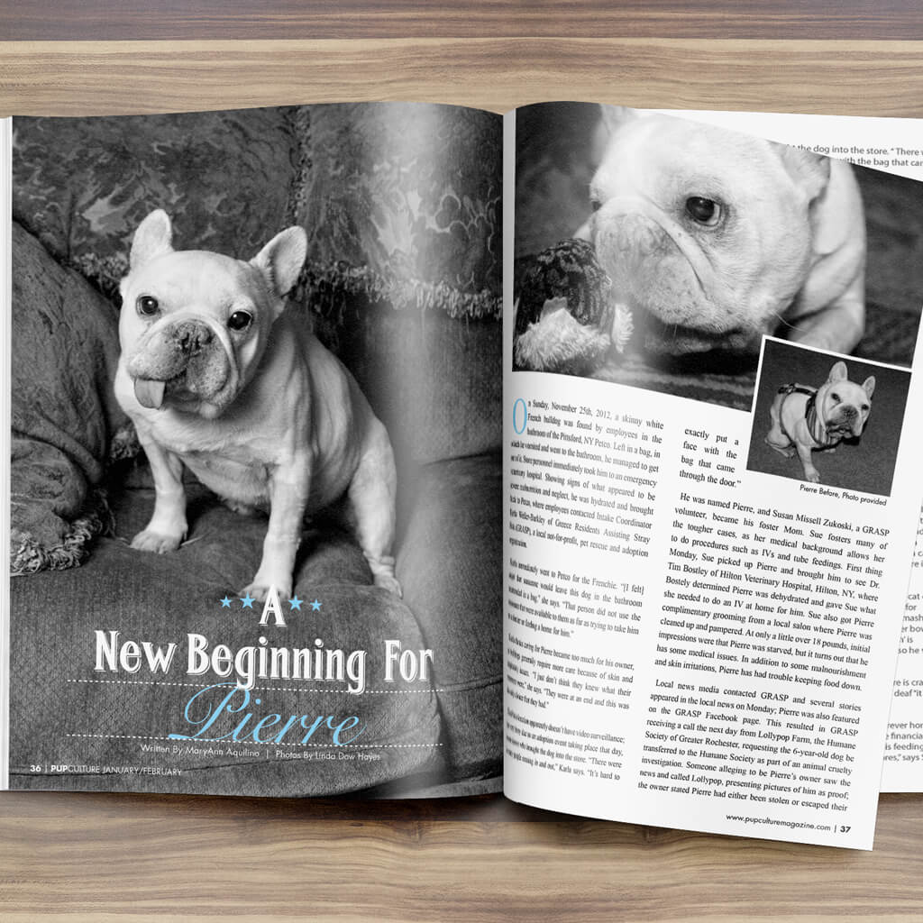 Pupculture-Mag-Pet-Article-Design-Pierre-Dog