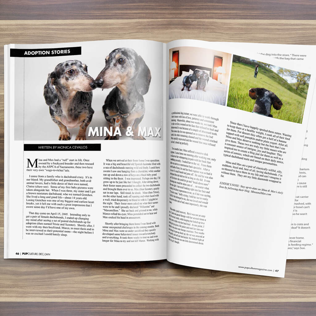 Pupculture-Mag-Pet-Article-Design-MinaMax-Rescue