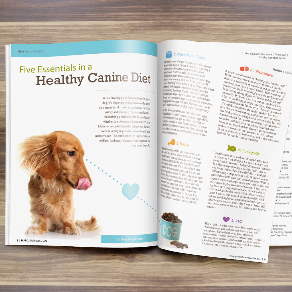 Pupculture-Mag-Pet-Article-Design-Healthy-Canine