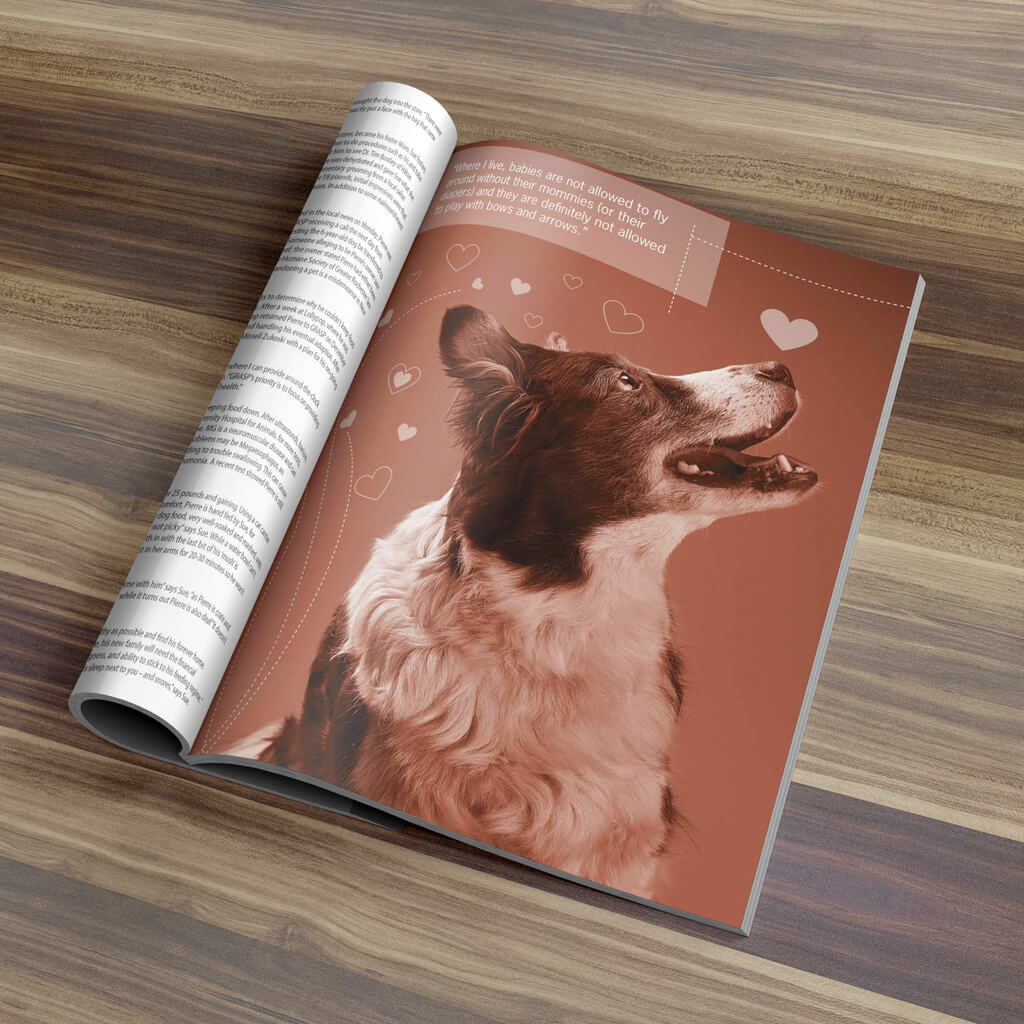 Pupculture-Mag-Pet-Article-Design-Bandit