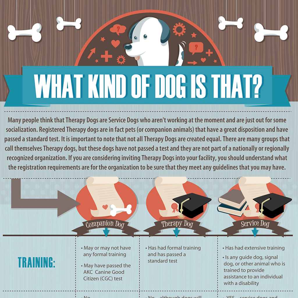 what-kind-of-dog-is-that-infographic-design-by-SniffDesignStudio
