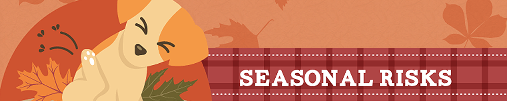 13 Puppy Perils & Pearls Of The Fall Season – Pet Infographic