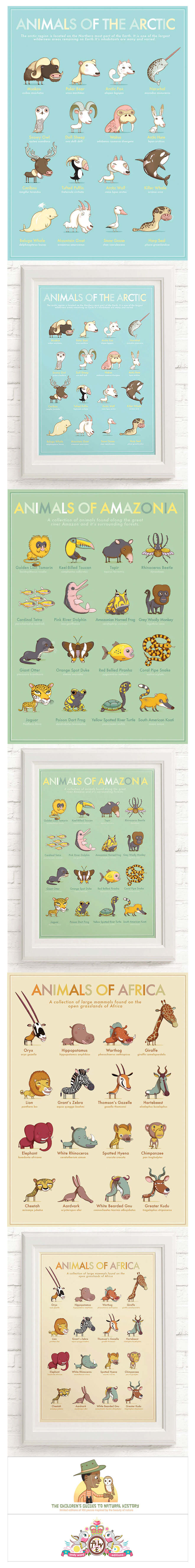 animals-around-the-world set of animal illustration collection by Andy Ward Studio