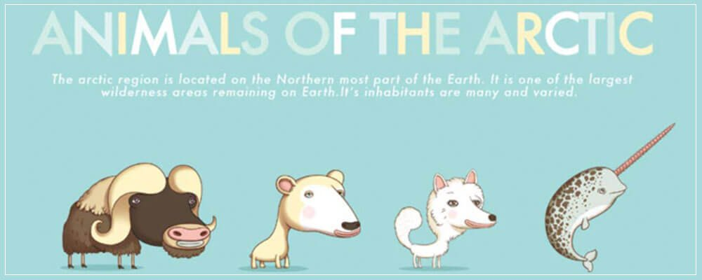 Animals Around The World – Illustration Collection Must Have
