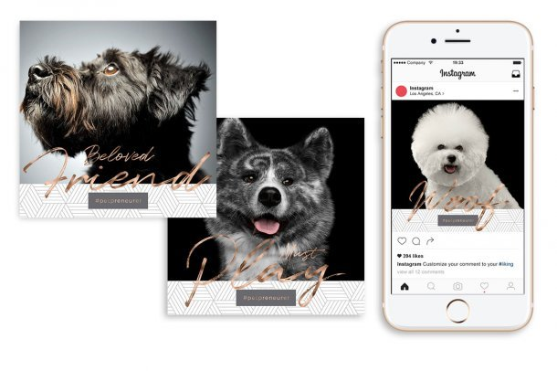 set of free haute dog social media graphics by Sniff Design Studio